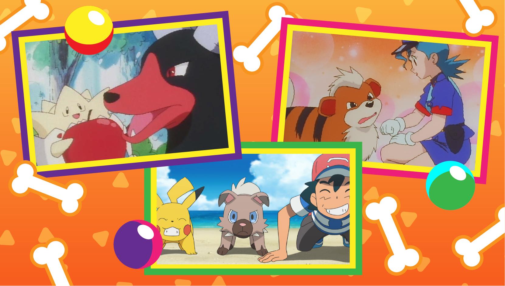 TV Pokémon Día del Perro